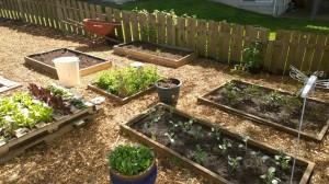 new garden