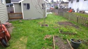 old yard/ garden beds