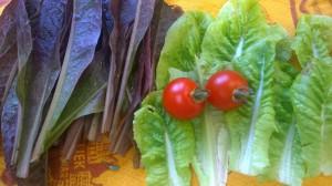 garden lettuce tomato